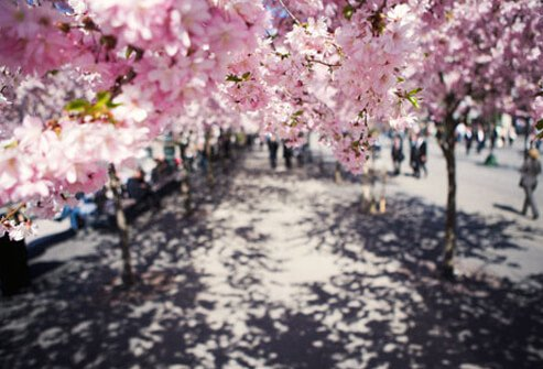 10 Worst Cities for Spring Allergies With Pictures