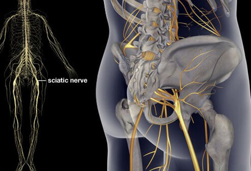sciatica causes, treatment, symptoms & exercises, Skeleton
