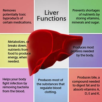 what is cirrhosis of the liver? symptoms, treatment & stages, Human Body