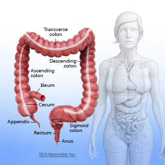 Colon picture anatomy