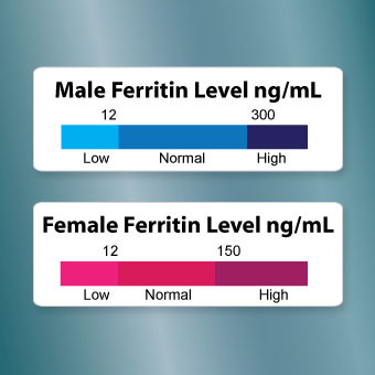 ferritin blood test: discover results and normal levels, Skeleton