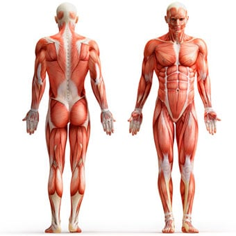 muscle cramps symptoms, treatment, causes - what are the types and, Muscles
