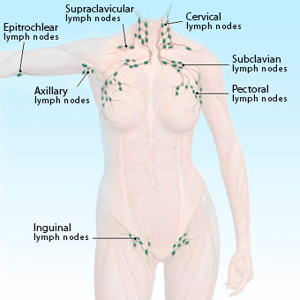 swollen lymph nodes pain in neck, groin, armpit, ear, causes, Human Body