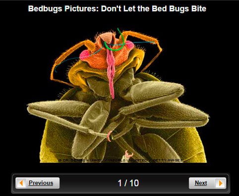 Bed Bugs Pictures Slideshow: Don't Let the Bed Bugs Bite