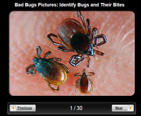 Bad Bugs Pictures Slideshow: Identify Bugs and Their Bites
