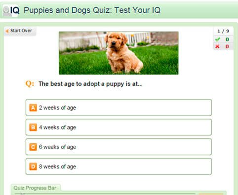 Puppies and Dogs Quiz: Test Your IQ