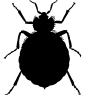 Learn about symptoms and signs of a bedbug infestation.