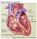 Thumbnail heart electrical system picture