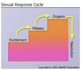 The sexual response cycle has which of the following stages
