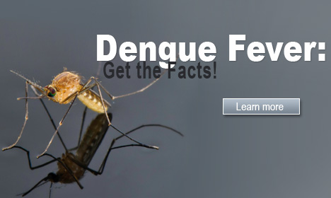 Dengue Fever: Get the Facts!