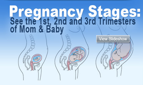 Pregnancy Stages: See the 1st, 2nd and 3rd Trimesters of Mom & Baby