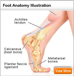 Picture of the foot