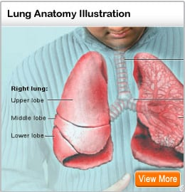 Picture of the lungs