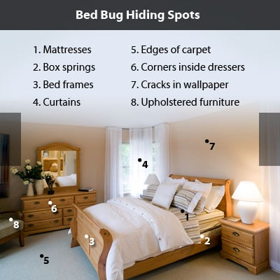 Bed Bug Bites Pictures, Symptoms and Treatment