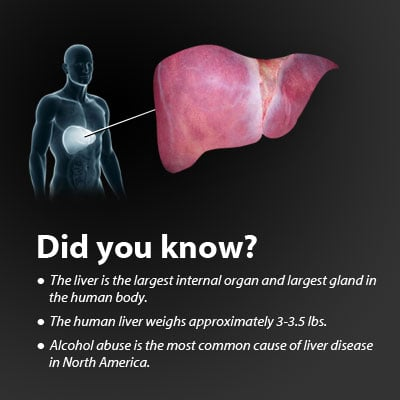 Liver Disease Symptoms And Causes Including Cirrhosis