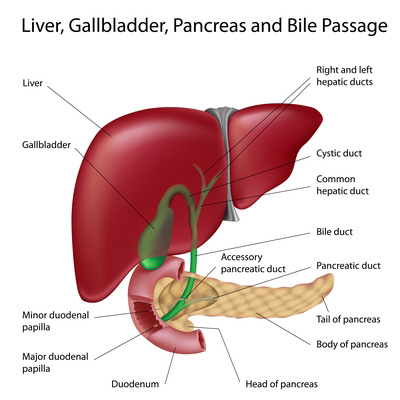 Study Shows Cannabis Protects the Liver From Alcohol Damage