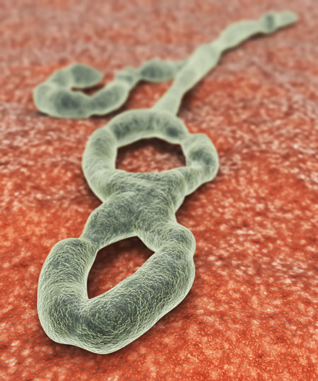 Picture of the Ebola virus