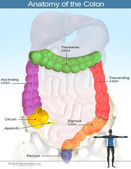 Picture of Colon 