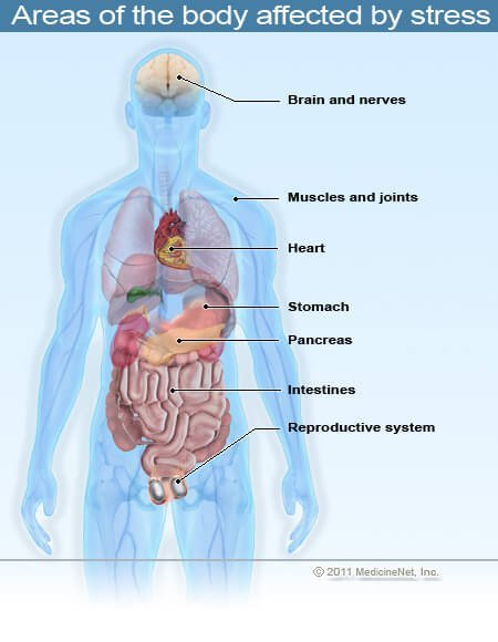 Picture of areas of the body that are affected by stress