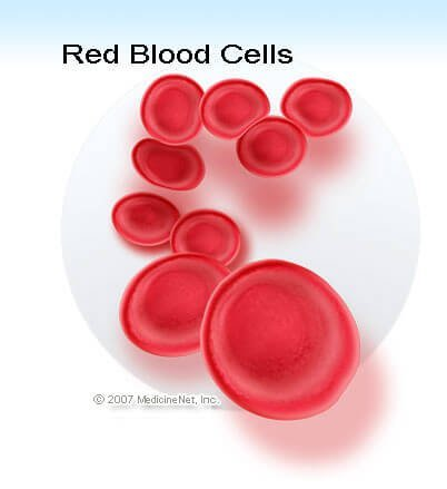 Picture of normal red blood cells