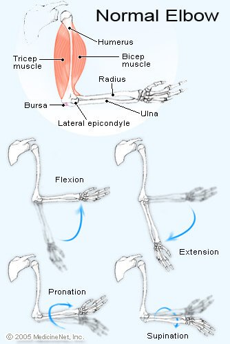 Normal Elbow Illustration - Elbow Pain
