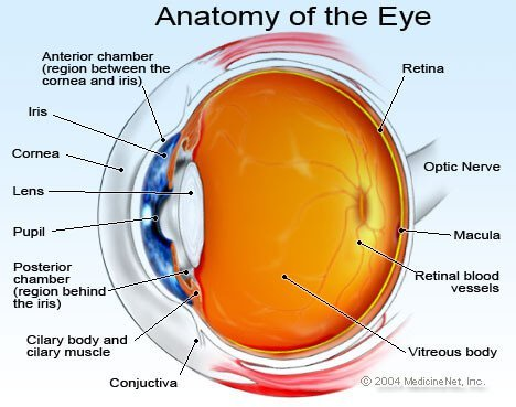 Eyeball Illustration - Macular degeneration