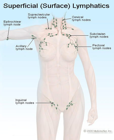 Picture of Lymph Nodes in the Body