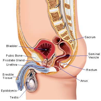 Male Illustration - Prostate enlargement