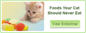 Cat Behavior Problems Slideshow