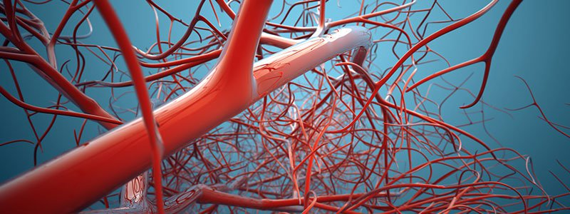 Image portraying the concept of veins.