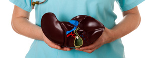 A clinician holding a liver model.