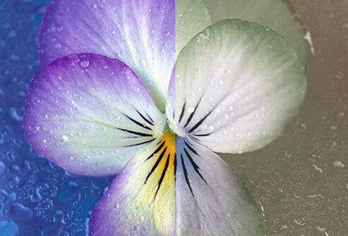 Photo of spilt color flower.