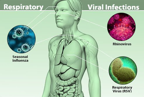 a stud on viruses and viral infections When dealing with upper respiratory infections in cats stud cats / sires so we will start with common respiratory viruses viral causes.