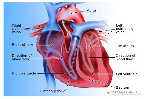 5 Types Of Heart Disease Symptoms Risk Factors Causes Stats