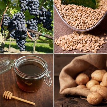 Shown are examples of sources used to make alcohol, such as grapes for wine, malted barley for beer, molasses for rum, and potatoes for vodka.