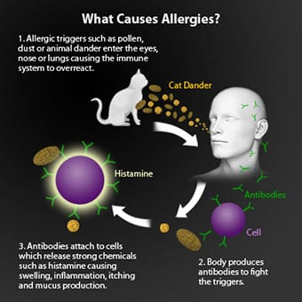 A diagram shows what causes allergies.
