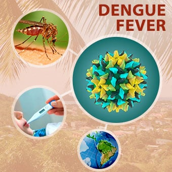 Dengue fever is a mosquito borne illness that can cause symptoms such as muscle pain, headache, fever, and rash.