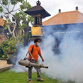 Controlling mosquito populations in urban areas could help reduce the number of dengue fever infections.