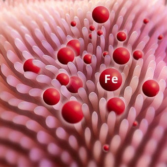 Ferritin Blood Test: Discover Results and Normal Levels