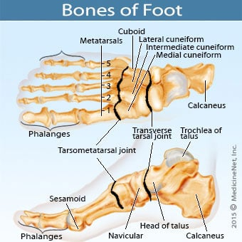 Top and side view illustrations of the foot bone structure.
