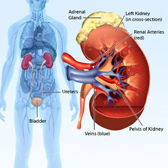 13 Symptoms And Signs Of Kidney Renal Failure Causes Stages