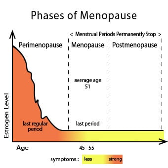 A Raph Chart Shows The Phases Or Stages Of Menopause