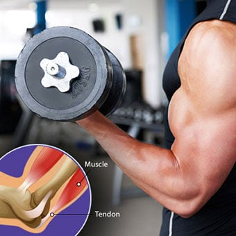 A man lifts weights at the gym, and a callout illustrates the muscle and tendon.