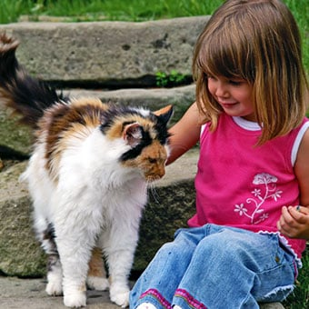 A girl plays with a stray cat.