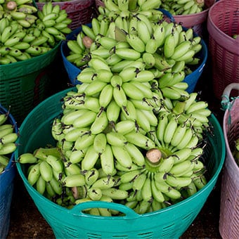 Bundles of unripe bananas in baskets.