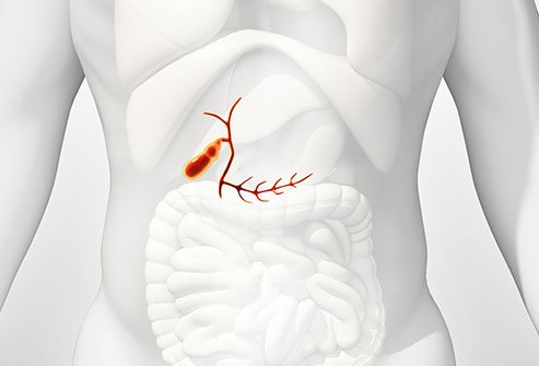 The common bile duct carries bile from the liver and gallbladder into the intestines to break down food for digestion.