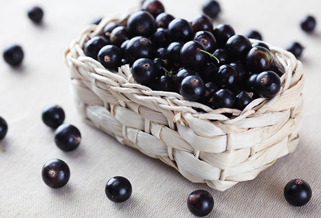 Blackcurrant bushes were grown in America back in the 1629s