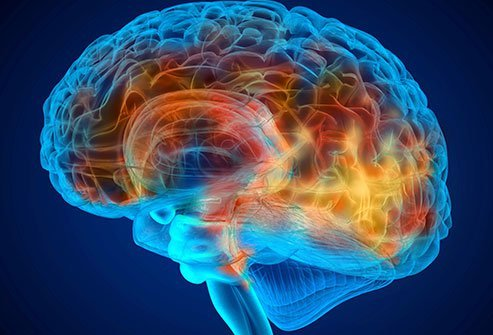The frontal lobe is the largest lobe of the brain.