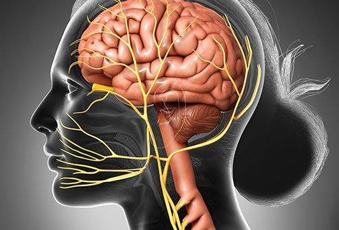 Stimulation of the vagus nerve is used to treat seizures.
