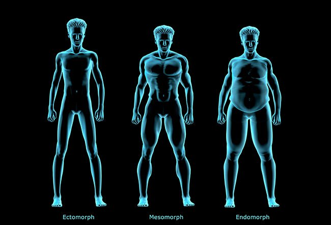 Different body types or somatotypes have different skeletal frames and body compositions.